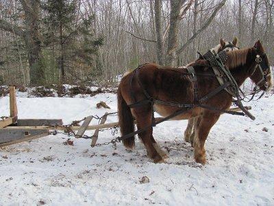 Paseo en trineo con caballos en Baqueira Beret 1h