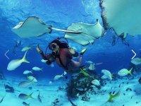 Buceando con la fauna marina