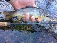 Pescando en el río Cabriel
