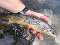 Uno de los peces capturados