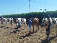 Alumnos y caballos