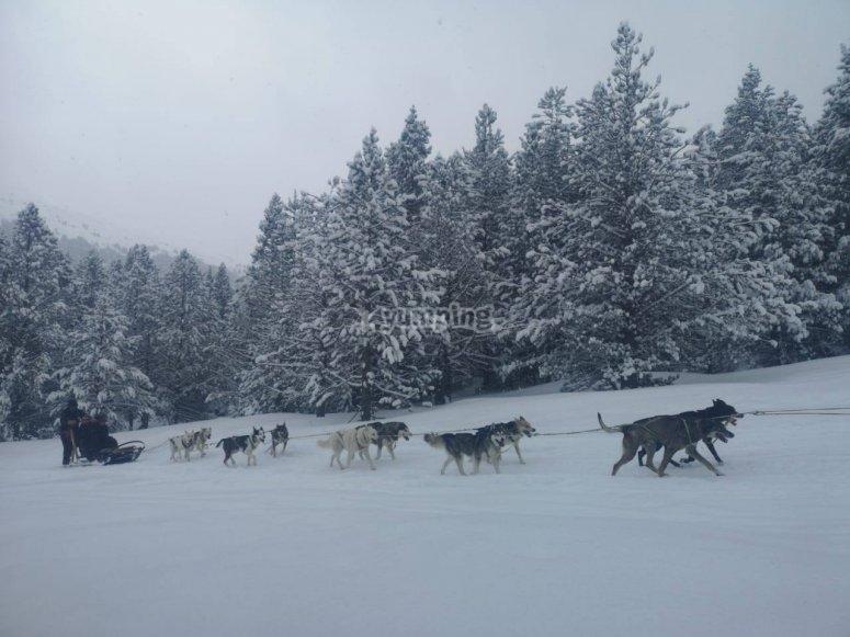 Trineo tirado por perros en Andorra