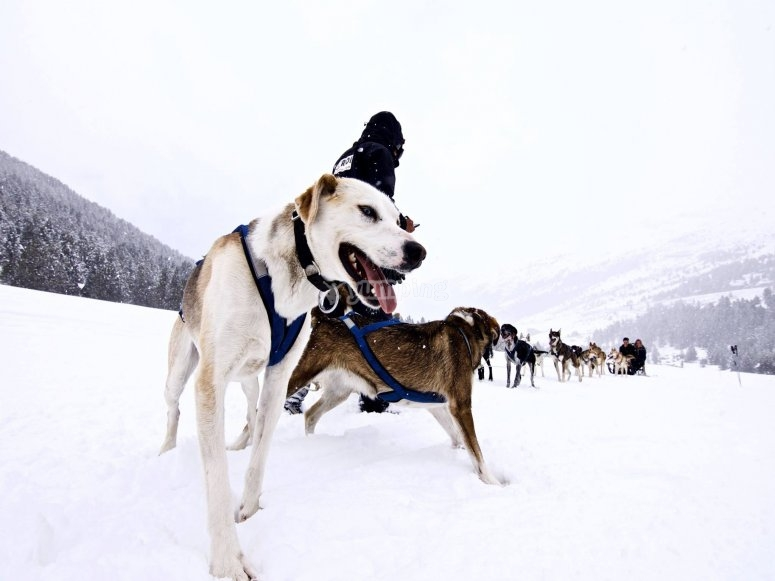 Trineos para nieve en Andorra