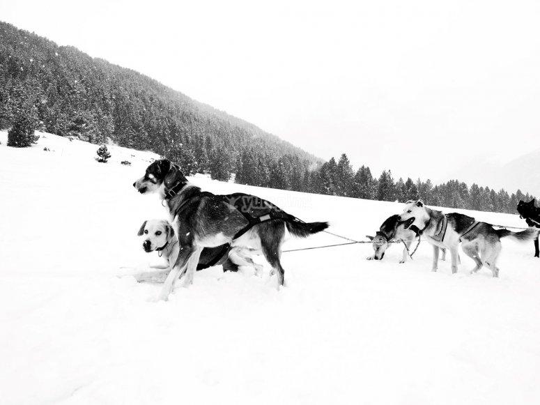 Excursión mushing en Grau Roig