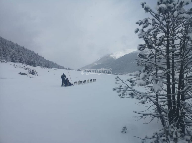 Tour de mushing por el entorno de Grau Roig