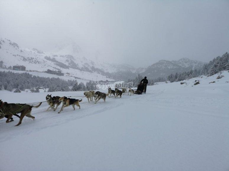 Paseo en trineo de perros Andorra