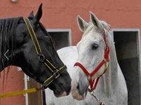Oferta Ruta a caballo y visita a Cavas Torreblanca