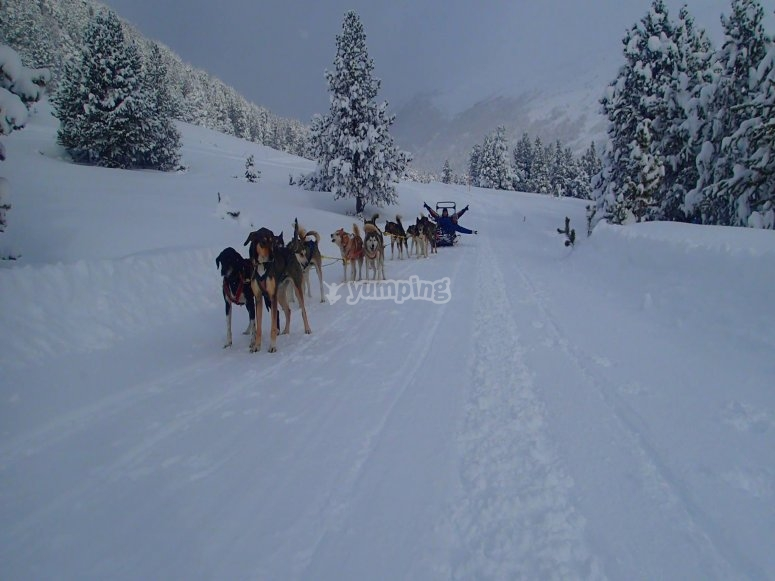 Mushing in Andorra