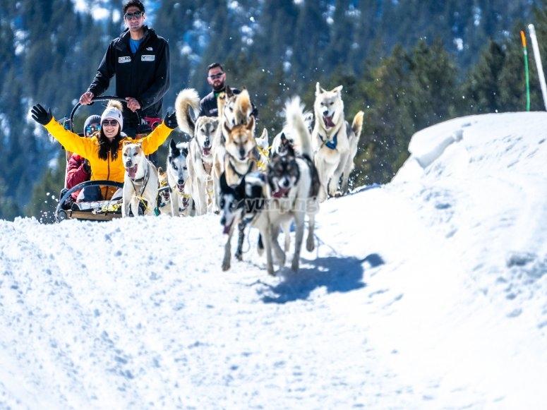 En el trineo tirado por perros de nieve