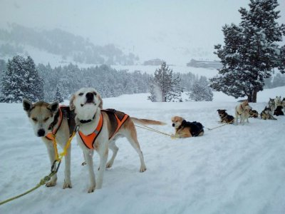 Dog Sledding route 5 km in Grandvalira
