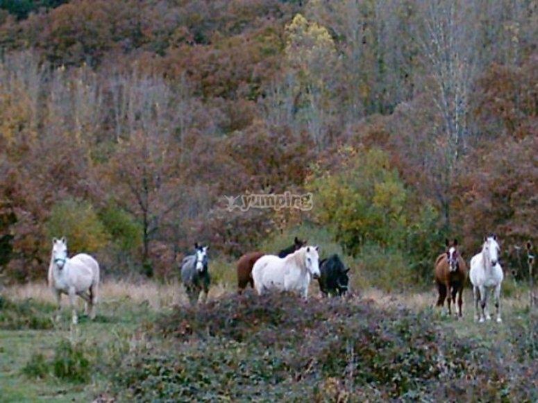 caballos en la naturaleza.