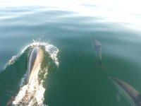 海豚在海中