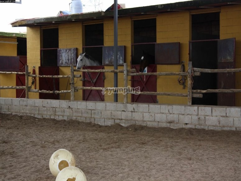 Stables and stalls