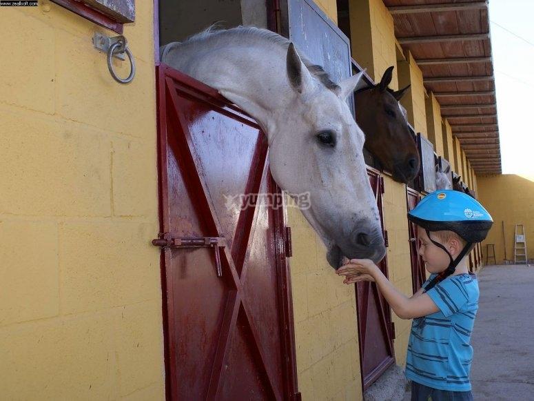 Peque saludando al caballo