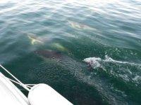 鲸类在马拉加海洋动物