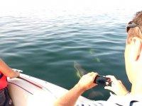 客户看海豚接触