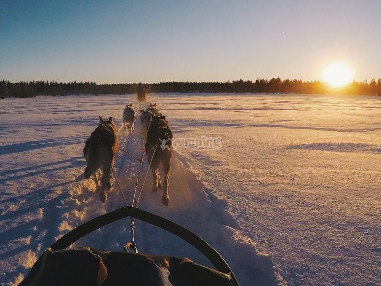 雪橇上的日落