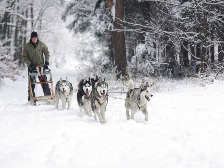 狗在雪地里
