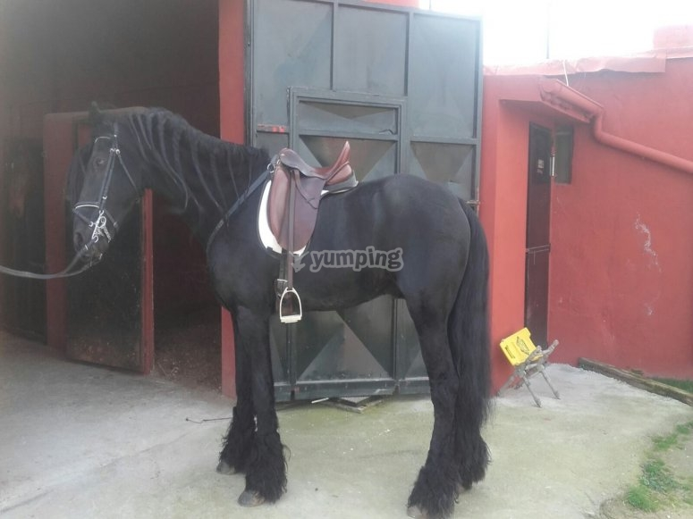 Caballo negro elegante