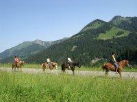 cavalli in fila1