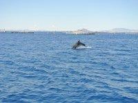delfino da lontano