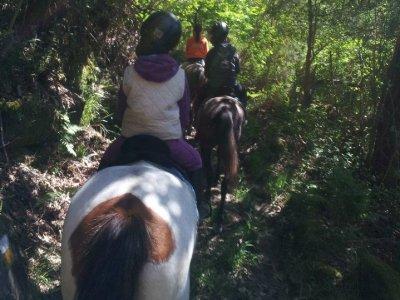 Paseo a caballo en Marín de 2 kilómetros