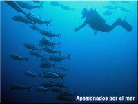 apasionados por el mar