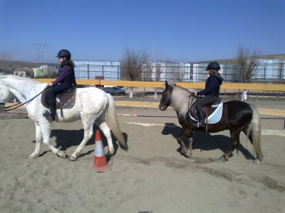 Riding lesson for any level, 1 hour