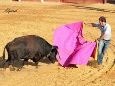Baco Fiestas
