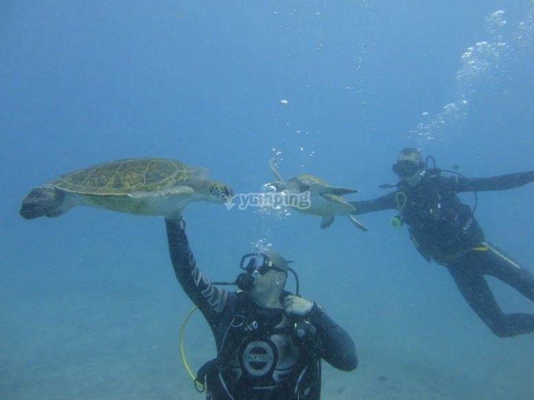 Interactuando con las tortugas