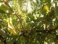Wine cellar tour + wine tasting in Rías Baixas