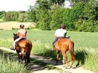 Paseos a caballo por la zona