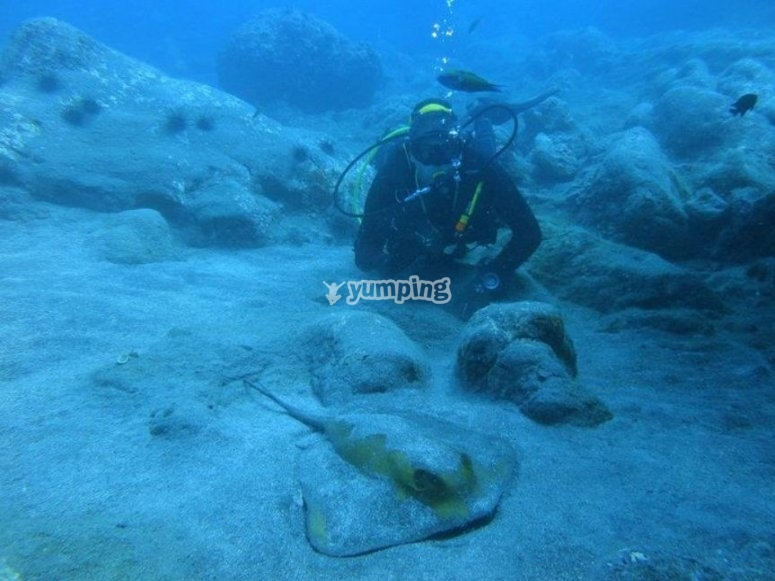 在Puerto Santiago潜水