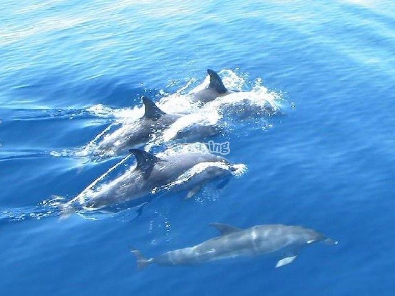 Avistamiento delfines