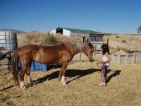 Preparando al caballo para el paseo