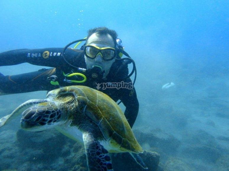 Scuba diving in Tenerife
