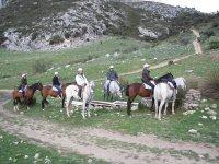 马匹休息和饮用水