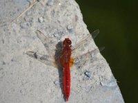 Especies entomologicas