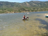 On the horse in the water