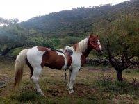 Uno de nuestros preciosos caballos en el campo