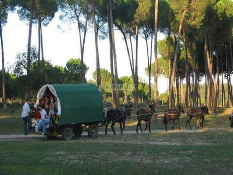 En el carro de caballos