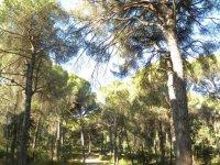 rutas por pinares