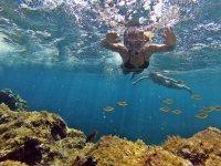 Snorkel con peces