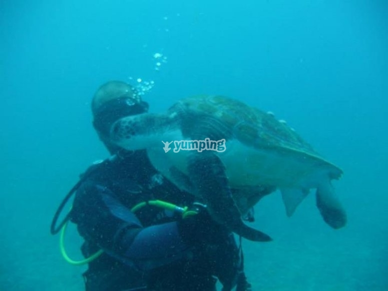 Buceo con tortugas