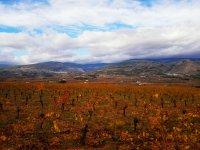 Vinas ecologicas en otono