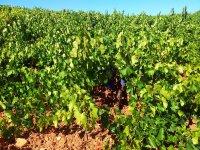 Vinas ecologicas