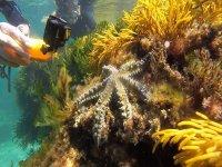 Fotografiando especies marinas