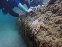 Estrella de mar en roca