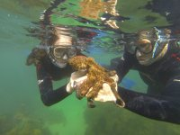 Buceo snorkel
