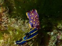 Especies marinas alucinantes